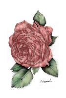 美しき牛肉の薔薇